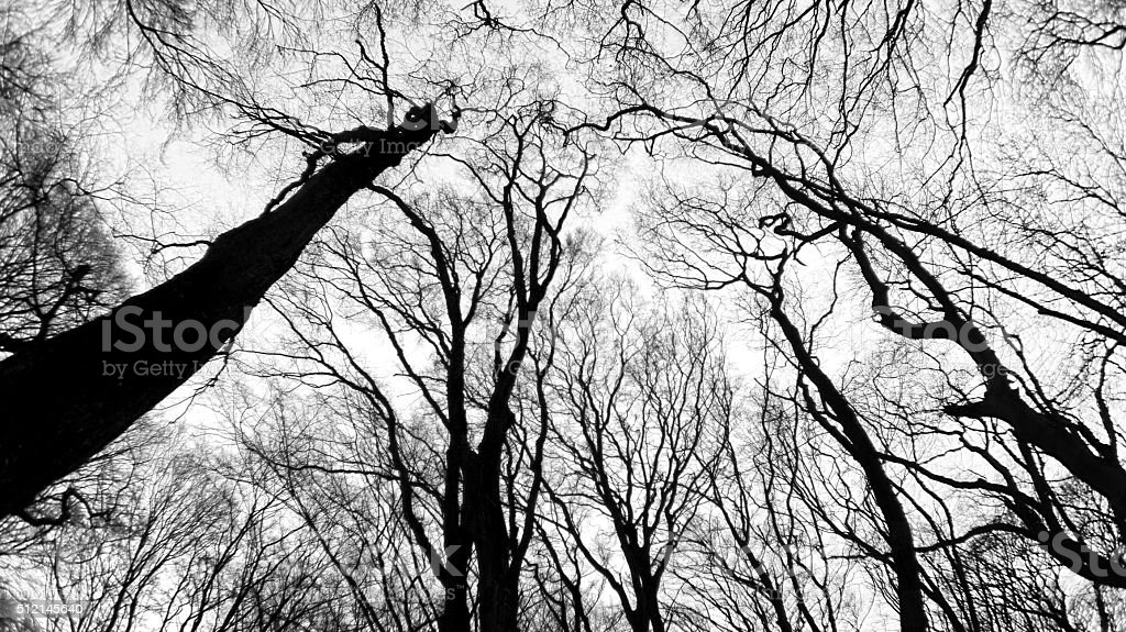 Black and white forest stock photo