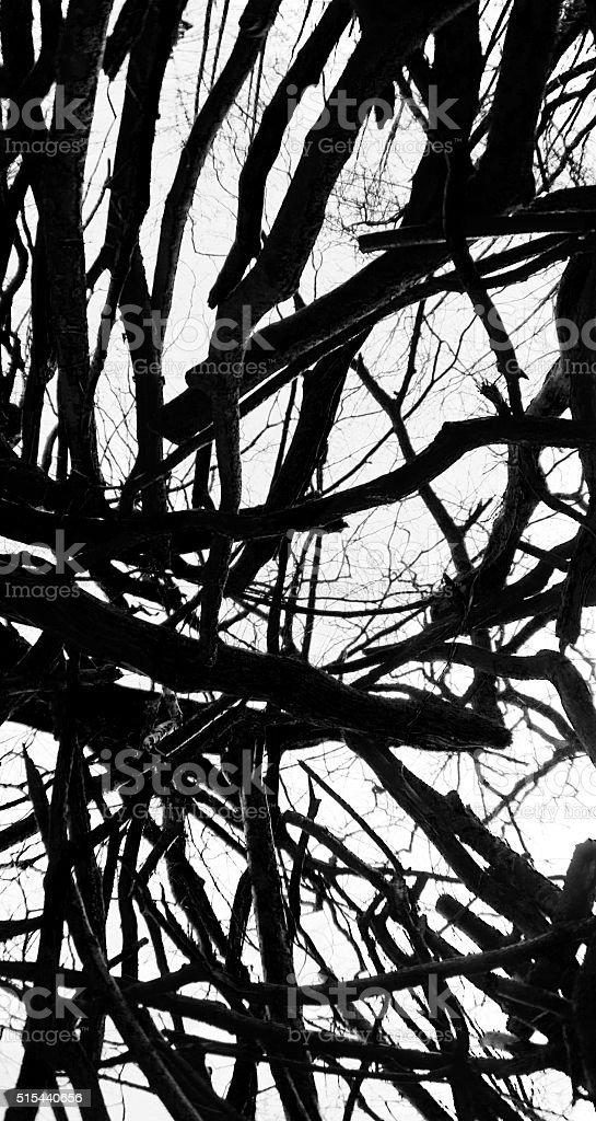 Black and white forest structure stock photo