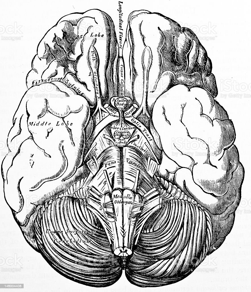 A Black And White Illustration Of A Brain Stock Photo ...