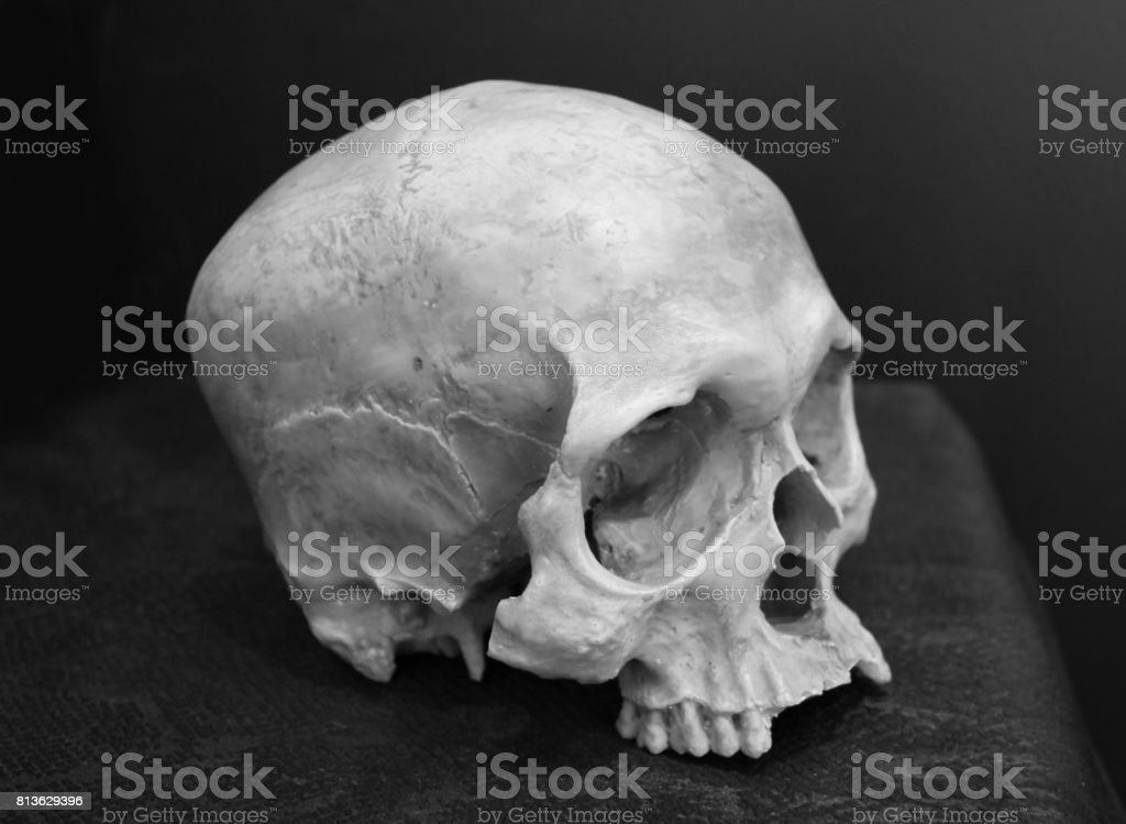 b1eb0507c0 Black And White Image Of Weathered Human Skull Stock Photo   More ...