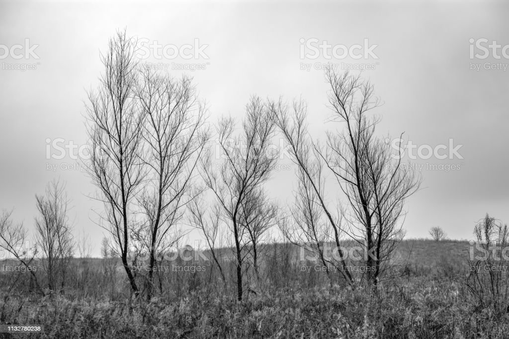 black and white landscape trees and field stock photo
