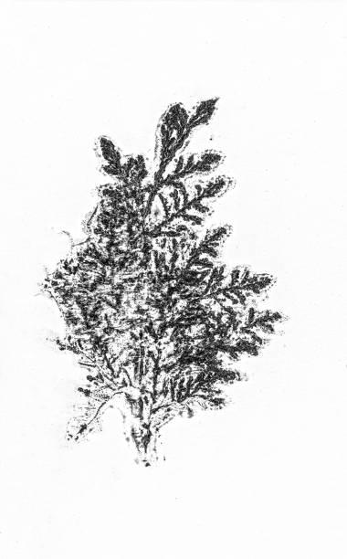 siyah ve beyaz yaprak desenleri birim izole arka plan stok fotoğrafı