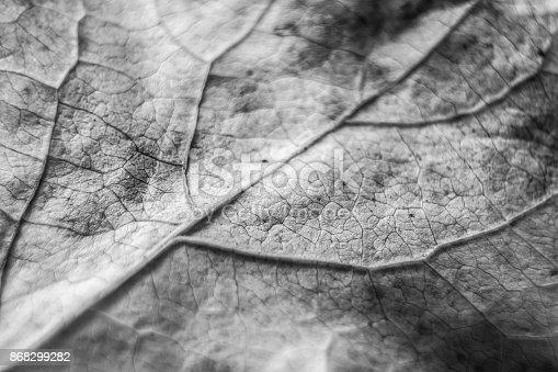637513166istockphoto Black and White Leaf 868299282