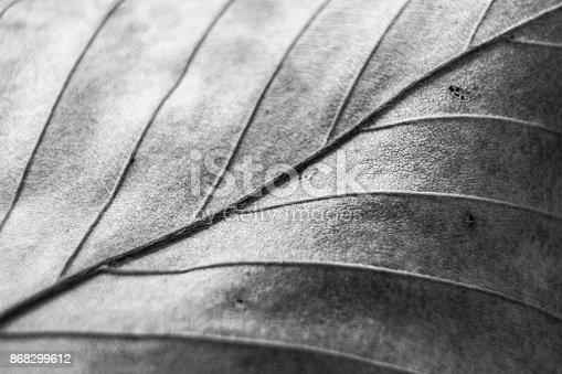 637513166istockphoto Black and White Leaf 868299612