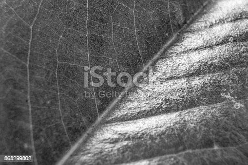 637513166istockphoto Black and White Leaf 868299802