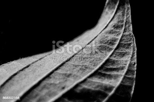 637513166istockphoto Black and White Leaf 868302158