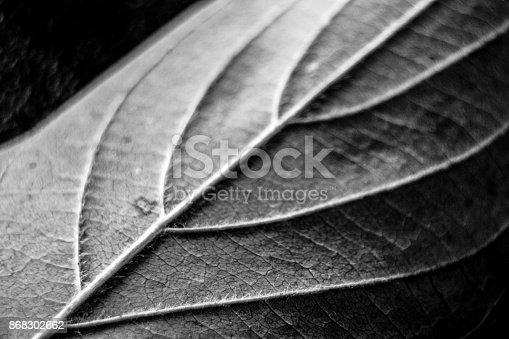 637513166istockphoto Black and White Leaf 868302662