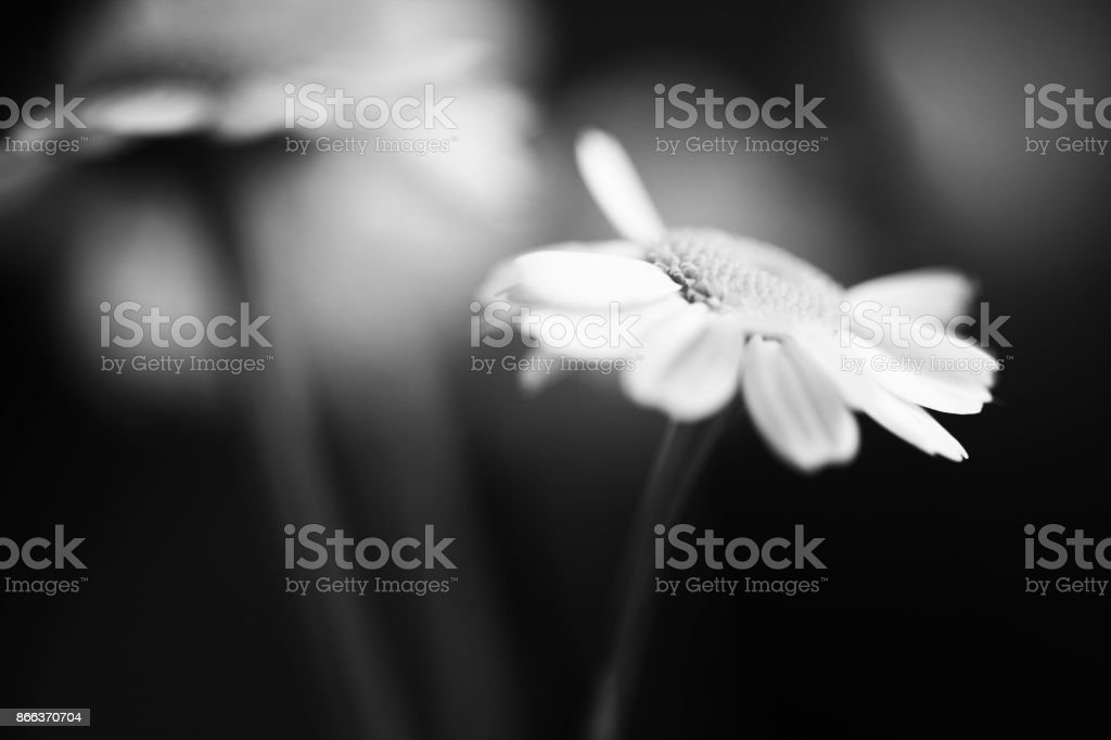 Black and white macro flower. Fine abstract art. stock photo