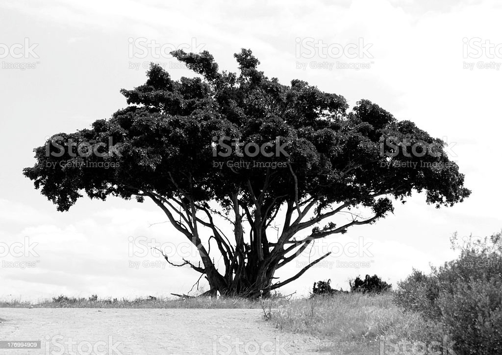 Black and white of a lonely tree royalty-free stock photo