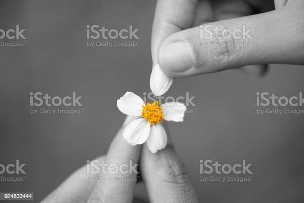 Black and white of close up sad woman hand tears off petals of daisy picture id924833444?b=1&k=6&m=924833444&s=612x612&h=f5 6chruopk2fmdpzks8tjk5kfzgoqnx11xmze1a8m4=