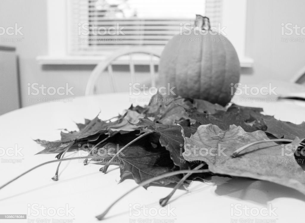 black and white photo of fall leaves and a pie pumpkin on kitchen table – zdjęcie