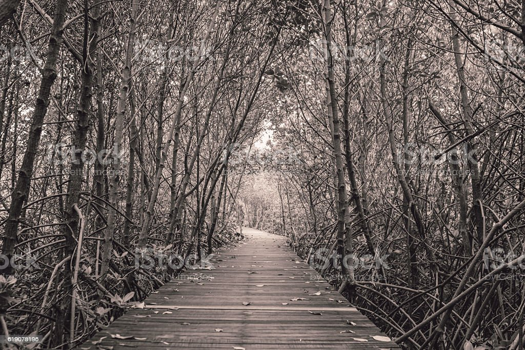 Black and white photo of mangrove forest with wood walkway stock photo