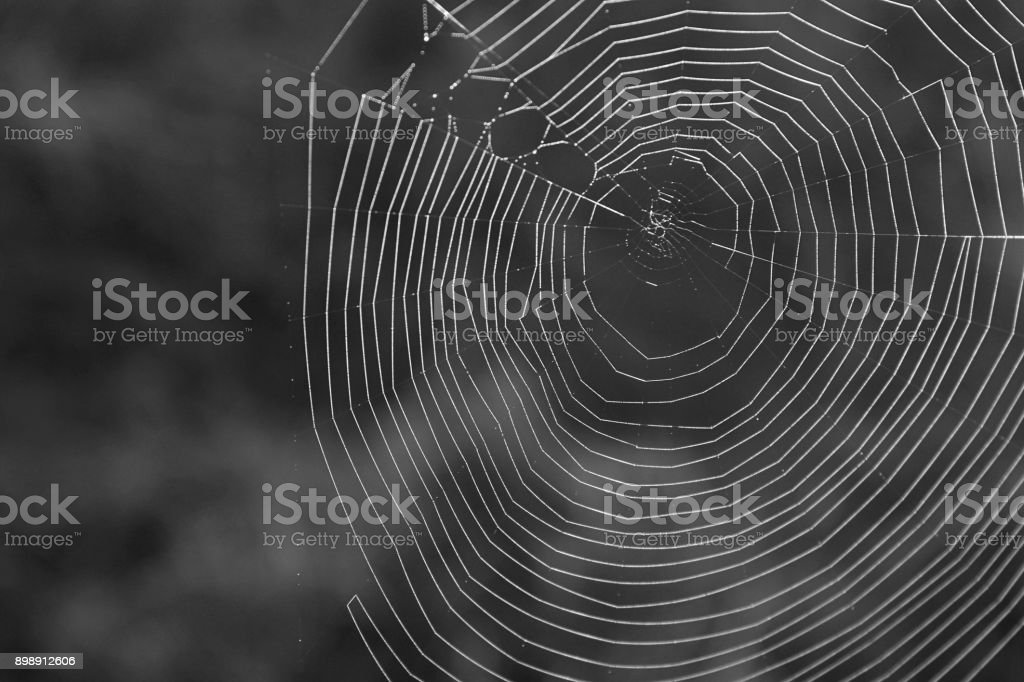 Black and White Photography of a Natural Spiderweb in the Mountains. stock photo