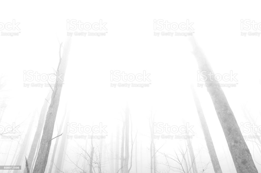 Black and White Photography of Trees in the Deep Woods of the Mountains. stock photo