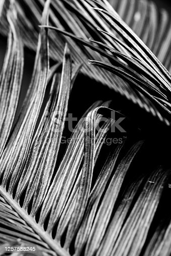 637513166 istock photo Black and white photos of plant leaves 1257588245