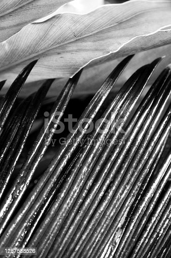 637513166 istock photo Black and white photos of plant leaves 1257588526