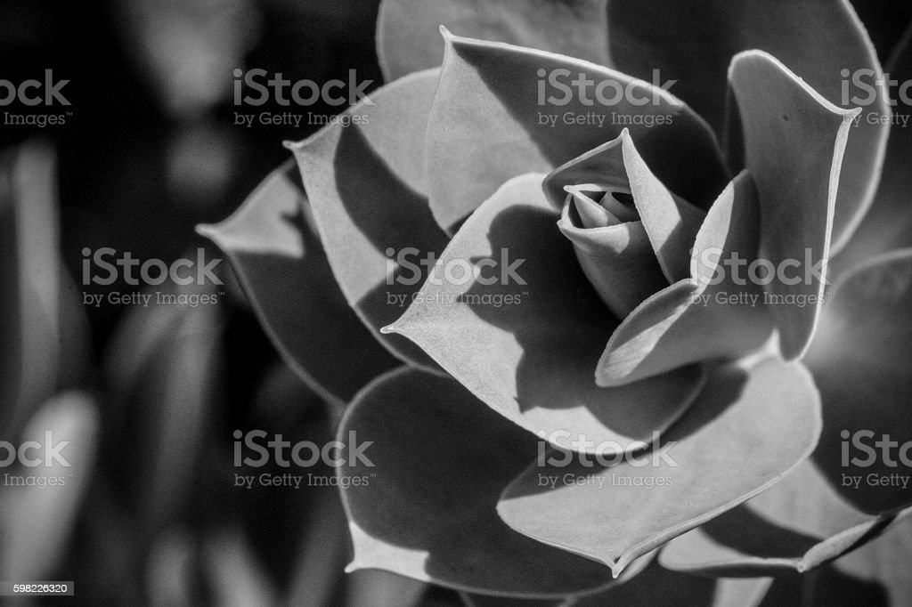 Preto e branco de plantas foto royalty-free