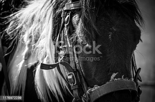 Close up photo portrait of a horse in black and white color