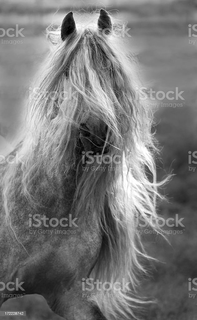 Black and White Portrait of Horse with Long Mane royalty-free stock photo