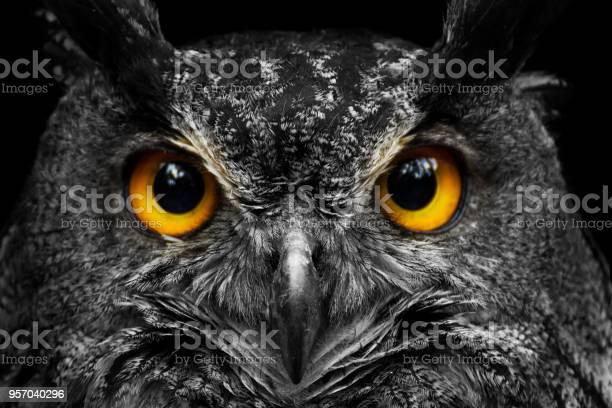 Black and white portrait owl with big yellow eyes picture id957040296?b=1&k=6&m=957040296&s=612x612&h=ktsmfrqovb4xhmvu6vcqoy4q5xbput i55mkyg9hwyw=