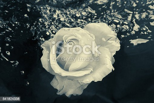 612015846 istock photo Black and white rose flower with water 541824338