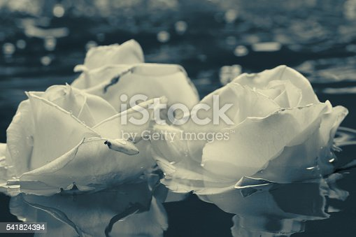 612015846 istock photo Black and white rose flower with water 541824394