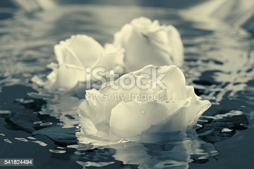 612015846 istock photo Black and white rose flower with water 541824494