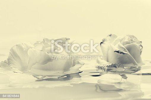 612015846 istock photo Black and white rose flower with water 541824544