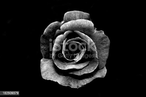 Black and white photograph of a rose on a dark background.