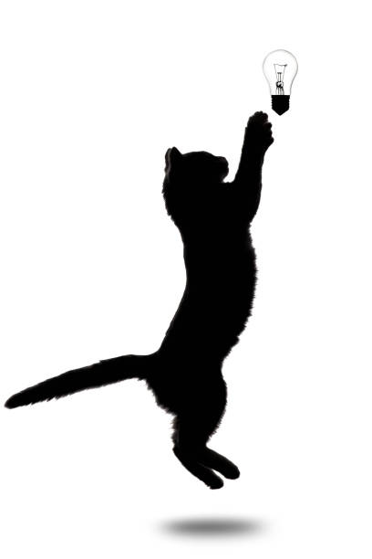 Black and white silhouette of little kitten jumping upwards on white picture id916151404?b=1&k=6&m=916151404&s=612x612&w=0&h=zhlf4ngcxaqzqcfwbkupo9f3nwyfay qins gih27pw=