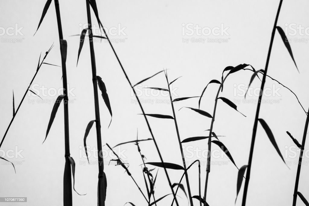 Black and white silhouetted bamboo stock photo
