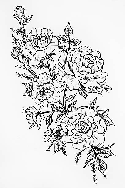 Black and white sketch of three beautiful roses picture id626513354?b=1&k=6&m=626513354&s=612x612&w=0&h=d25t rauhn14j785xrvly1 ji82cqcisktktc1srkpe=