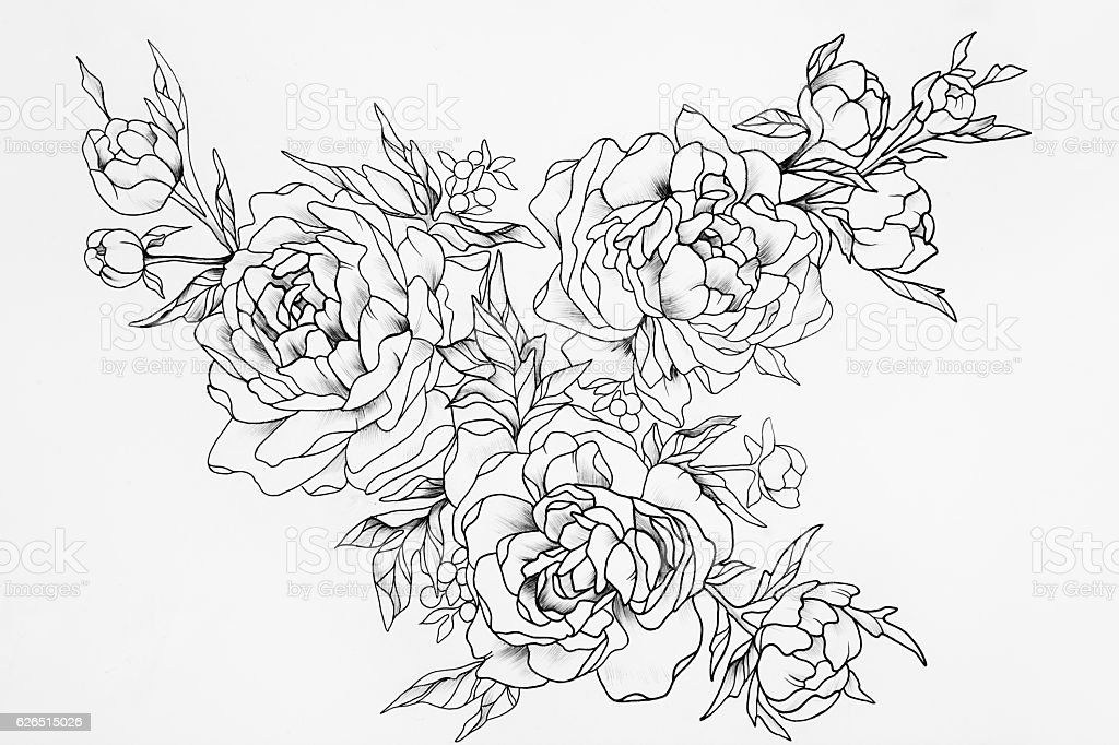 Black and white sketch of three beautiful roses. stock photo
