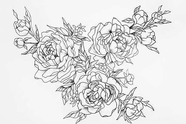 Black and white sketch of three beautiful roses. - Photo