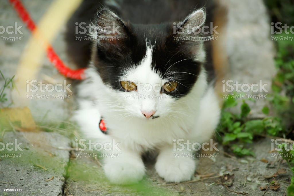 Black and white small kitten in green garden stock photo