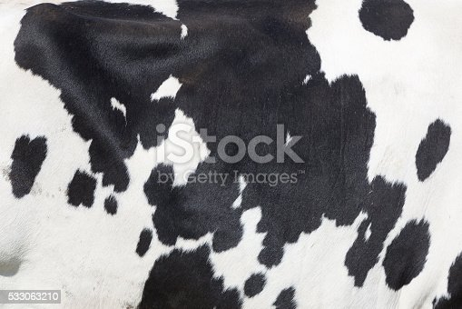 istock black and white spots on side of cow 533063210