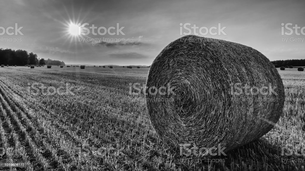 Black and white straw bale close-up in a sunlit stubble field stock photo