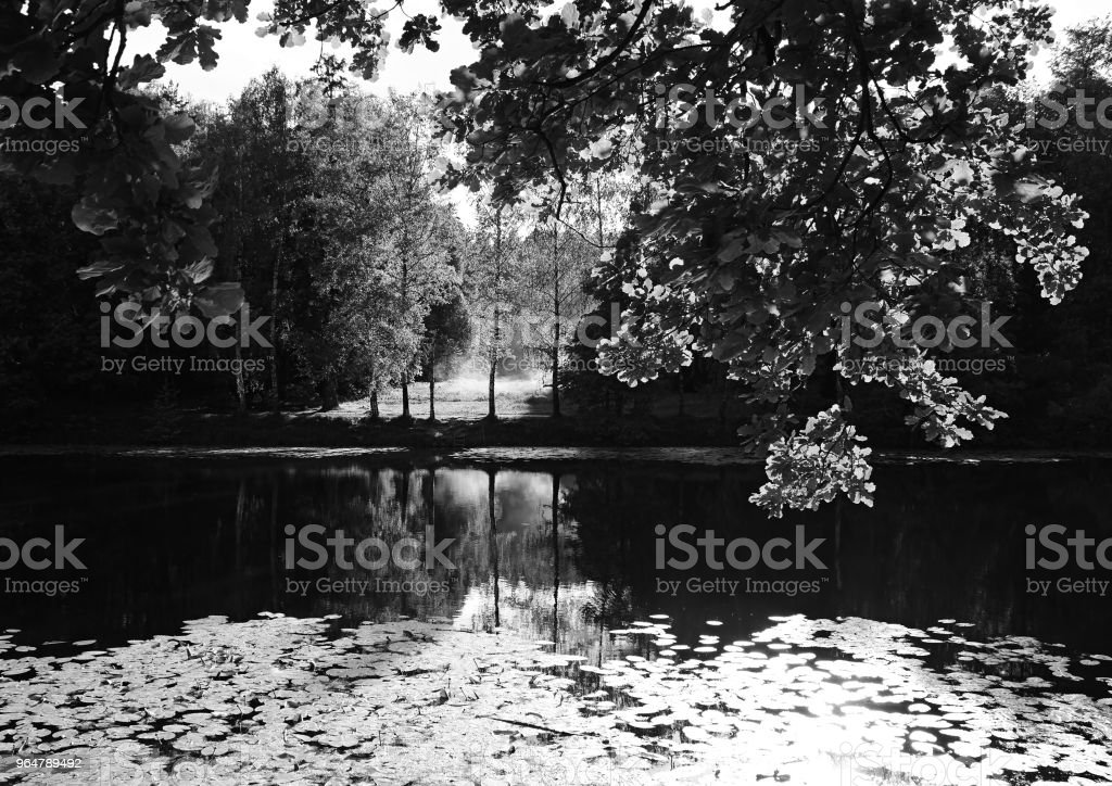 Black and white summer park backdrop royalty-free stock photo