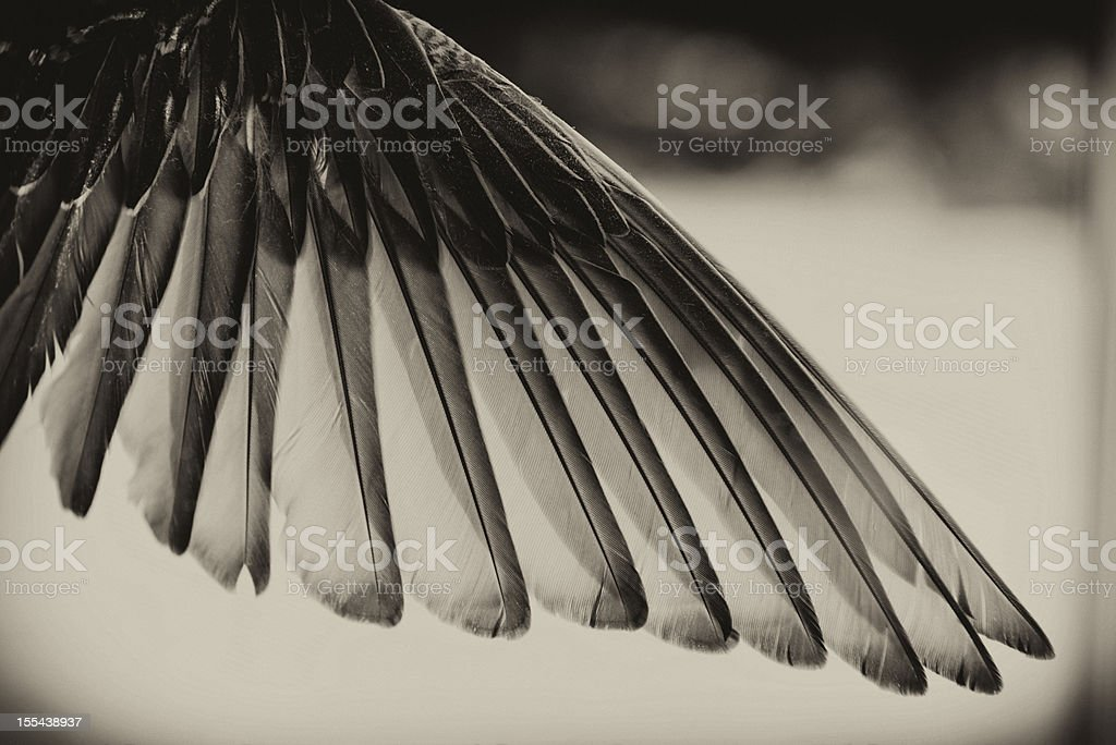 Black and White Toned Bird's Wing. stock photo