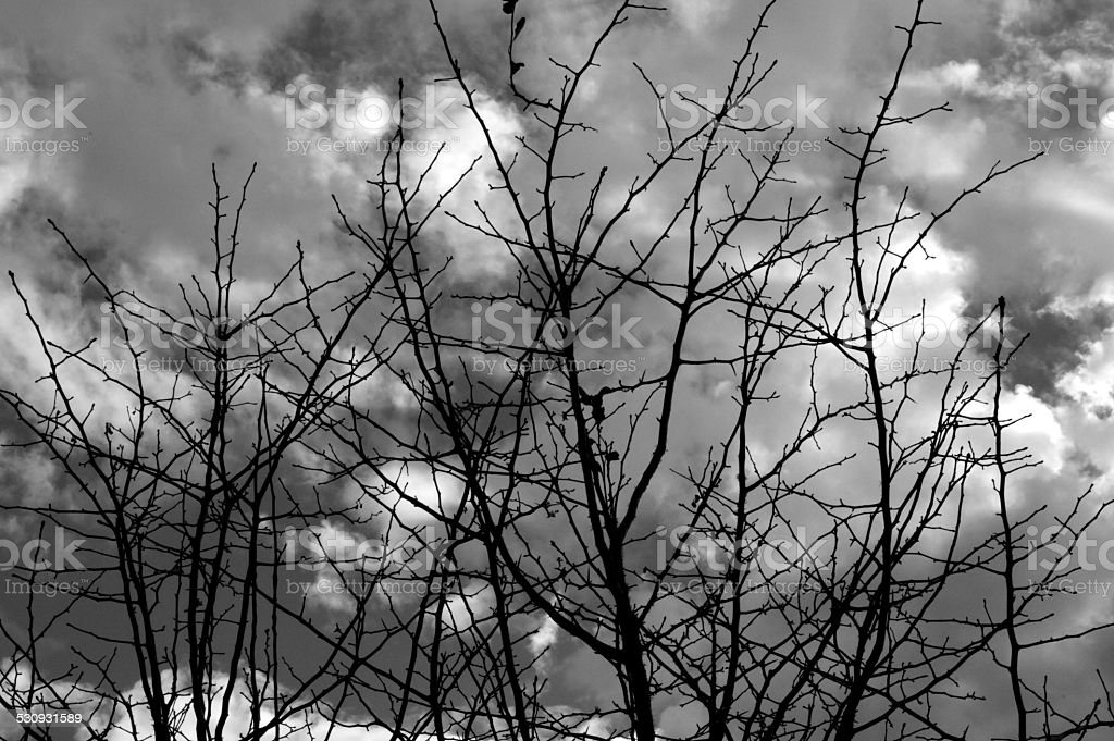 Black branches against a stormy gray sky.
