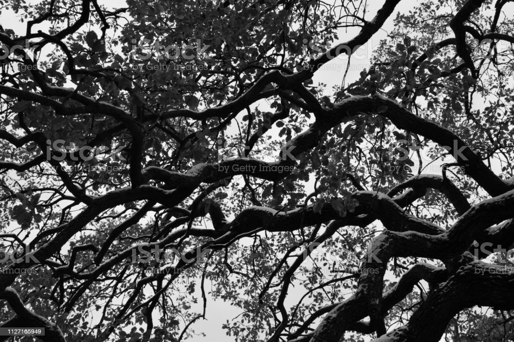 Black and White Tree Branches stock photo
