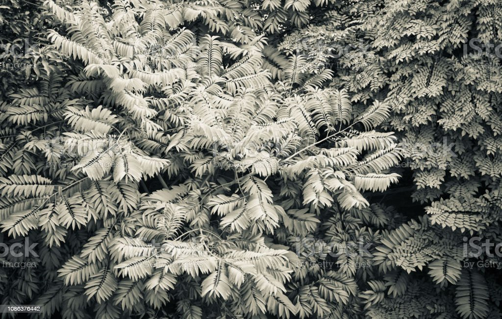 Black And White Tree Leaves Unique Photo Stock Photo Download Image Now Istock