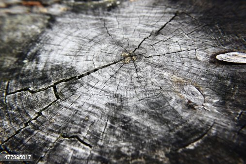 istock Black and white tree rings: the circle of life 477395017