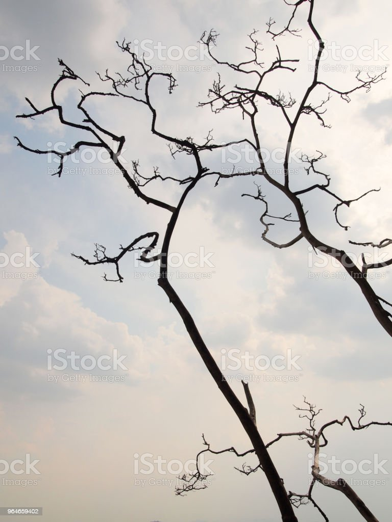 Black and white tree without leaves silhouette royalty-free stock photo