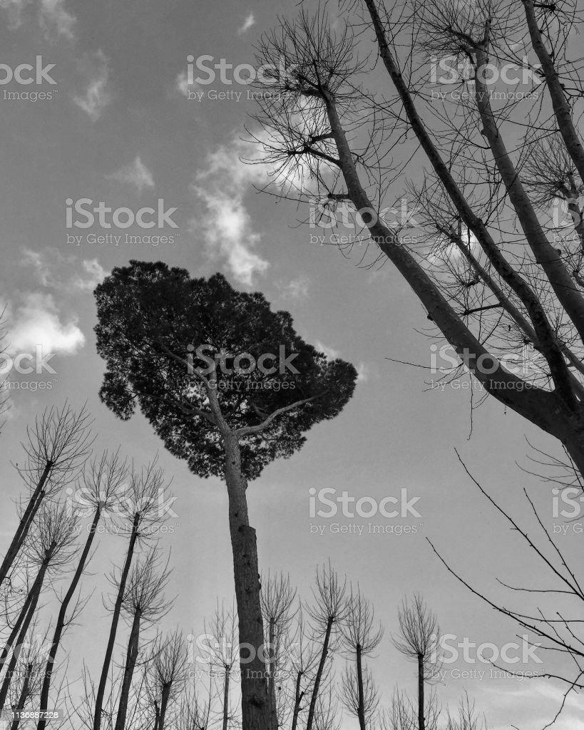 Schwarze und weiße Bäume in Italien – Foto