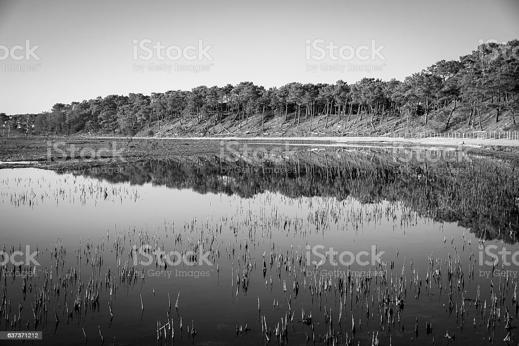 black and white view of mudflat with water stock photo