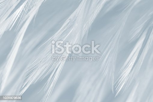 istock Black and white vintage color trends chicken feather texture background 1025929536
