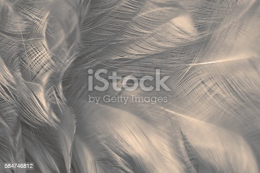 istock Black and white vintage color trends chicken feather texture background 584746812