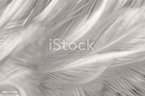 istock Black and white vintage color trends chicken feather texture background 584747850