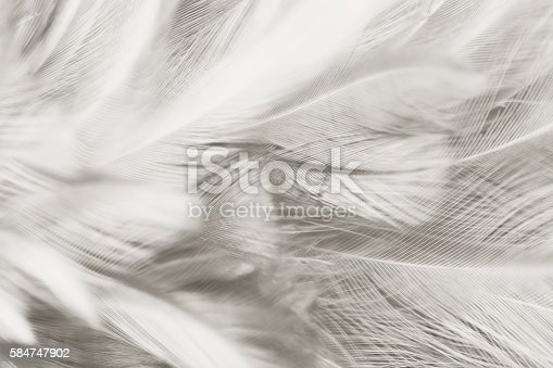 istock Black and white vintage color trends chicken feather texture background 584747902